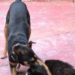 Uma and Bolom