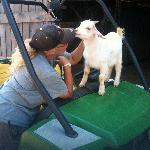 Moonshine the baby goat with Marion
