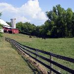 Looking back from the main house to the barn and pasture