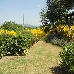 A lovely garden in Antica Tenuta Le Piane