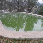 la alberca parece agua de Alfalfa