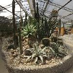 Bosco didattico, serra con piante grasse