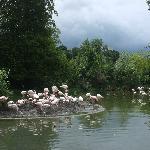 Flamingos beim Eingang
