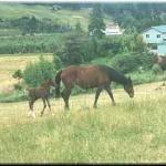 Blackbird Valley Western Pleasure Horse Treks Foto