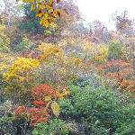 10月 錦色の森