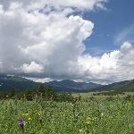 Summer wildflowers and rain clouds