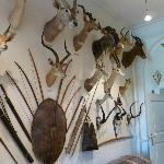 Some of the main trophy heads on the walls of the castle