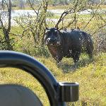 Hippo close encounter