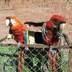 parrots healing