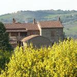 Ansicht von den Olivenbäumen