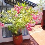 Fleur en terrasse