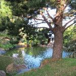 lovely little pond next to Jasmine cottage