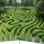maze in the garden