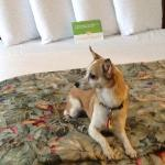 Our dog wants to return to La Quinta Oceanside