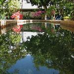port douglas b&b our swimming pool