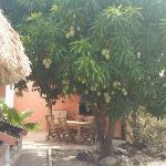Mangoes Anyone?
