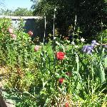 Extensive cottage gardens