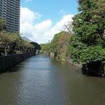 The Nu'uanu Stream flowing from the gardens to the street.