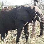 elephant while at thanda