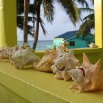 Conch shells on cabana 5