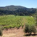 Vista desde los árboles de olivos