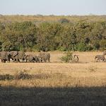 Elephants strolling by Plains Camp