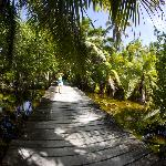 One of the paths on Long Caye