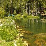 Big Springs Gardens Pond
