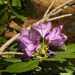 One of the many Sierra Wildflowers