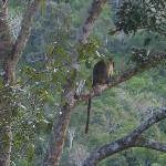 Tree Kangaroos, Mum