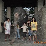 Elephant in Resort