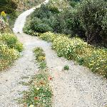 Roads to explore on Andros Island