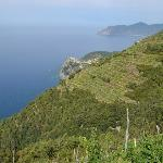 View in Vineyards above Manarola (looking to Corniglia)