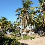 Chalets in the palm trees