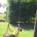 Canale - swings
