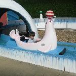 Seal ride