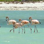 Flamingos Rosada