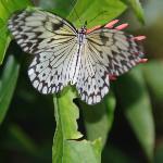 Mumbukal Butterfly house
