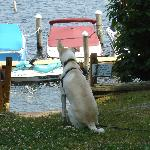 Max looks out at the view just outside our cottage.