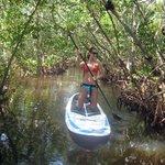 Mangrove tunnels