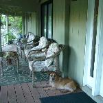 Doggy on porch