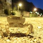 A wandering crab under the hotel...