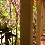 Katamah is a beachfront retreat secluded shaded in a grove of fruit tress and flowering plants.
