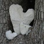 Pams beautiful pebble heart collection in a tree, she has lots!
