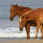 Stallion and mare at the oceans edge.