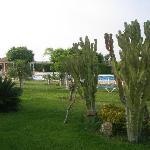 Zona verde detras de la piscina