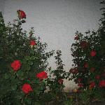 Flores del os jardines