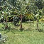 un apercu de jardin