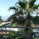 palm tree that you can touch from balcony