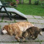 cane e gatto...